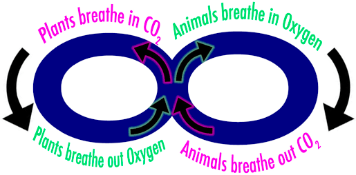 plant animal breathing cycle graphic